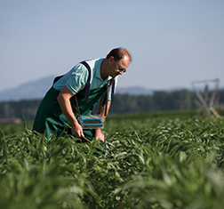 an essay on the us federal governments focus on agriculture and the farm law Herbert hoover: domestic affairs  the federal farm board was up and running  and the german government looked to the united states for cash europe's economic .
